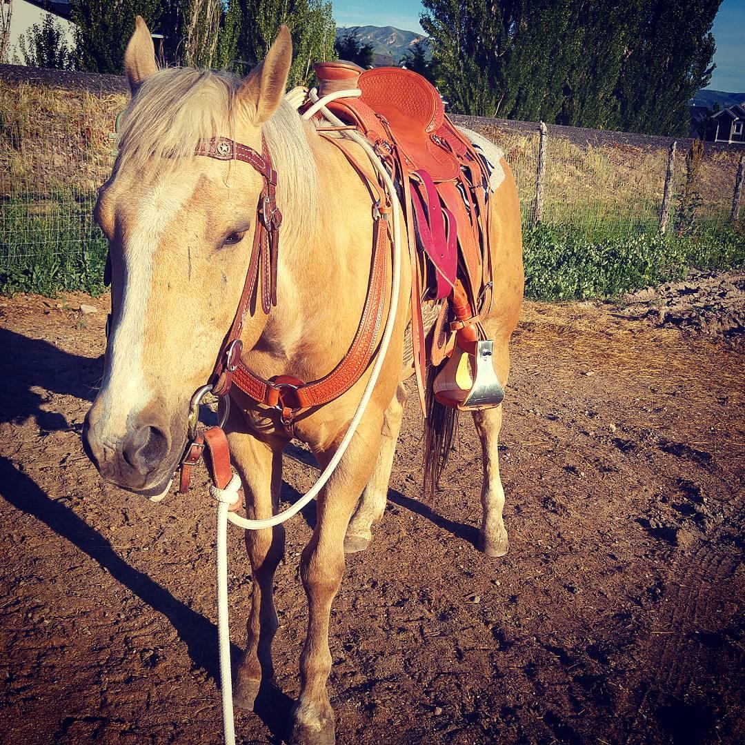Custom Saddle 2